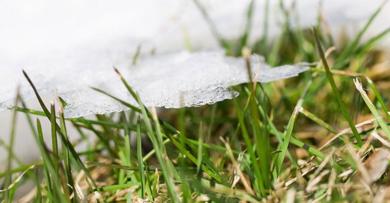 snow is melting - get ready for green grass