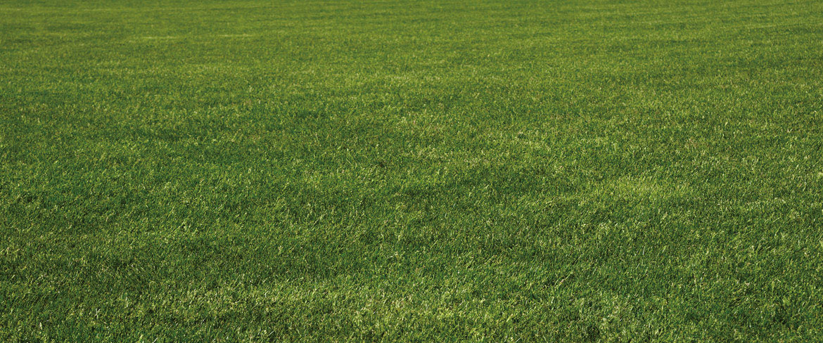 Uhl Turf grows fescue and bluegrass sod for your lawn