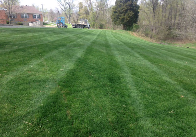 Sod looks great 11 days after a commercial installation
